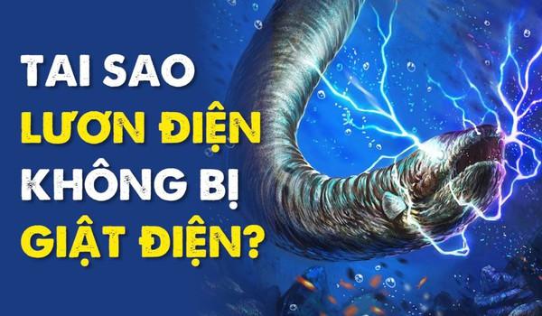 Tại sao lươn điện không bị giật điện?