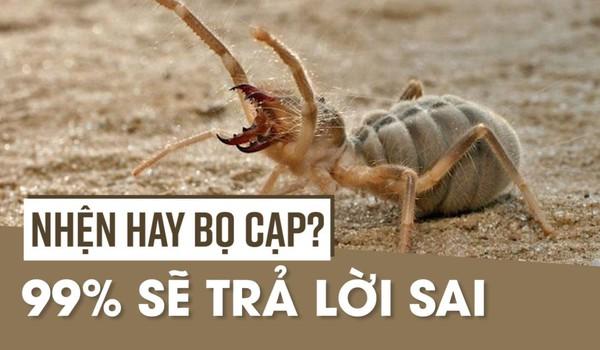 Nhện hay bọ cạp? 99% sẽ trả lời sai