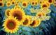 Thứ Sáu của bạn (23/6): Mong muốn của Ma Kết được đáp ứng