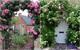 Chiêm ngưỡng vẻ đẹp lộng lẫy của những chiếc cổng nhà tràn ngập hoa