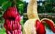 Những loại trái cây bất chấp mọi quy luật để tồn tại với vẻ ngoài vô cùng kỳ dị
