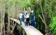 Khám phá con đường xuyên rừng tràm Tân Lập