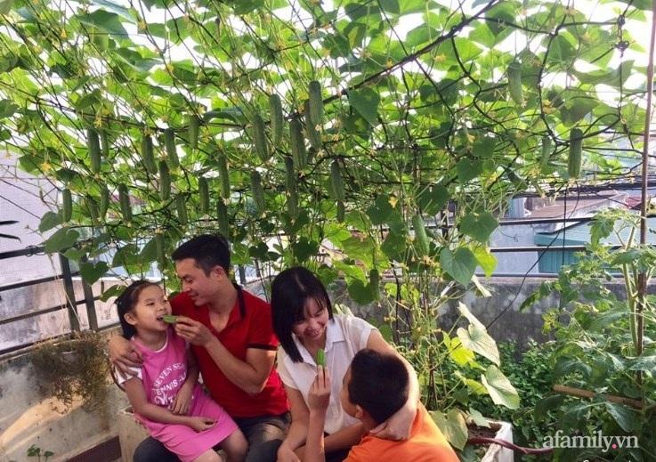Sân thượng 70m2 phủ kín rau quả sạch do người chồng đảm đang chăm sóc hàng ngày ở Hoàng Mai, Hà Nội - Ảnh 1.