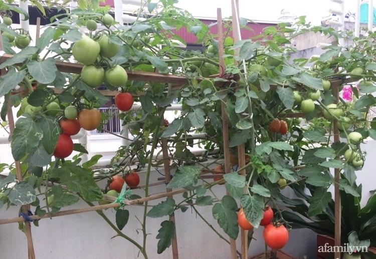 Sân thượng 70m2 phủ kín rau quả sạch do người chồng đảm đang chăm sóc hàng ngày ở Hoàng Mai, Hà Nội - Ảnh 11.