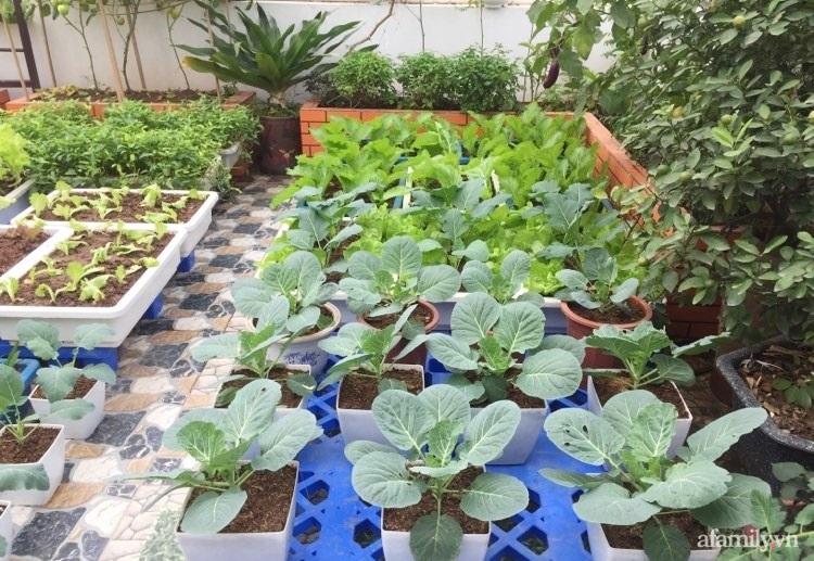 Sân thượng 70m2 phủ kín rau quả sạch do người chồng đảm đang chăm sóc hàng ngày ở Hoàng Mai, Hà Nội - Ảnh 2.