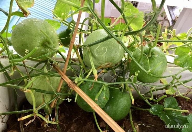 Sân thượng 70m2 phủ kín rau quả sạch do người chồng đảm đang chăm sóc hàng ngày ở Hoàng Mai, Hà Nội - Ảnh 16.