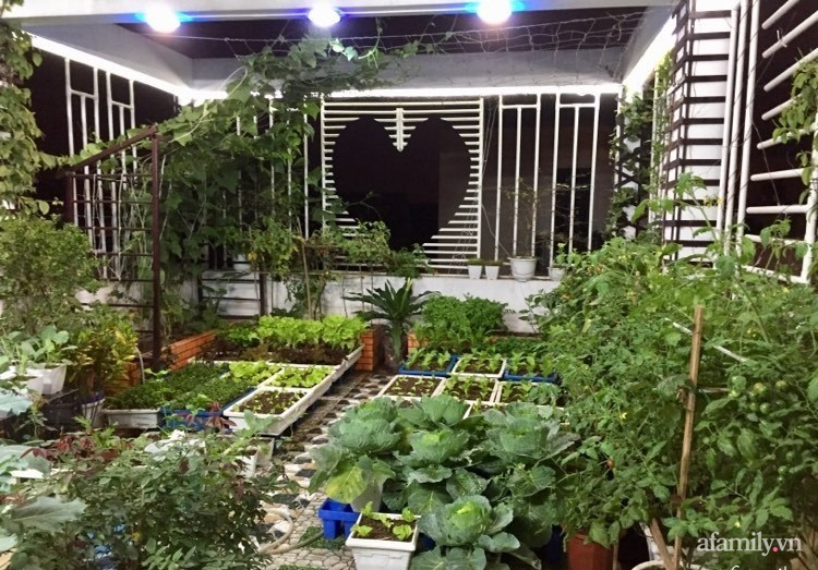 Sân thượng 70m2 phủ kín rau quả sạch do người chồng đảm đang chăm sóc hàng ngày ở Hoàng Mai, Hà Nội - Ảnh 7.