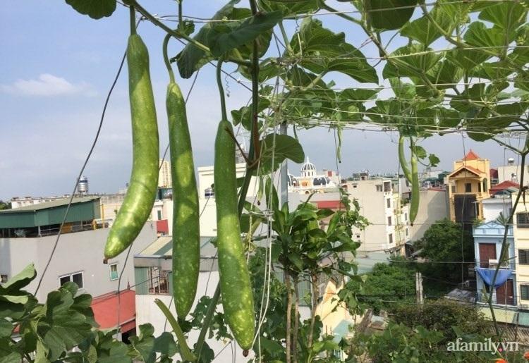 Sân thượng 70m2 phủ kín rau quả sạch do người chồng đảm đang chăm sóc hàng ngày ở Hoàng Mai, Hà Nội - Ảnh 9.