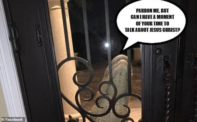 Nghe tiếng động lạ, gia đình hoảng hốt với cảnh tượng con cá sấu đu ngay cửa nhà nhưng thu hút sự chú ý lại là thái độ của chú mèo cưng - Ảnh 2.