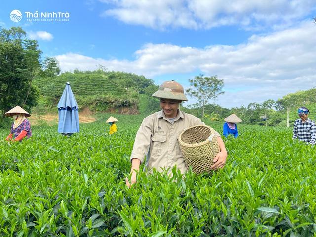 Thứ trà xanh làm từ cây chè sống nửa thế kỷ ở Thái Nguyên, giữ trọn hương vị truyền thống, ai uống cũng mê - Ảnh 1.