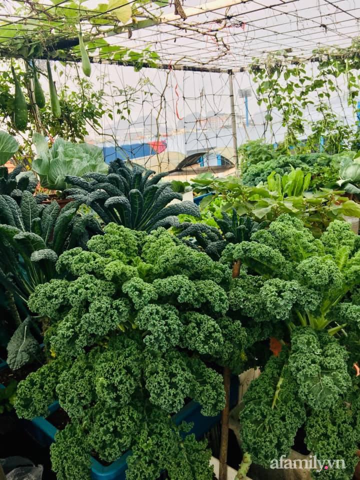 Cách trồng cải kale tốt tươi ngập tràn sân thượng của người phụ nữ đảm ở Quảng Ninh - Ảnh 6.