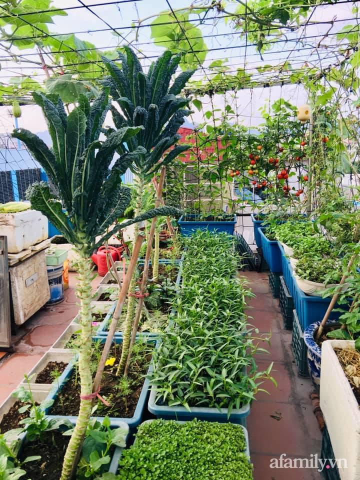 Cách trồng cải kale tốt tươi ngập tràn sân thượng của người phụ nữ đảm ở Quảng Ninh - Ảnh 8.