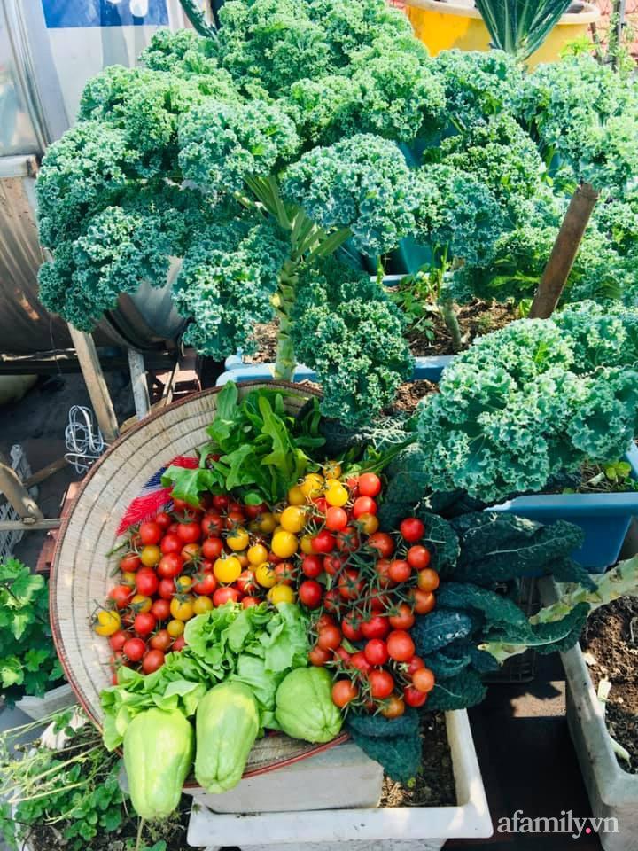 Cách trồng cải kale tốt tươi ngập tràn sân thượng của người phụ nữ đảm ở Quảng Ninh - Ảnh 9.