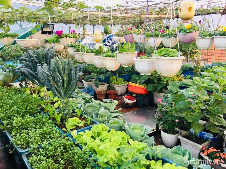 Cách trồng cải kale tốt tươi ngập tràn sân thượng của người phụ nữ đảm ở Quảng Ninh - Ảnh 1.