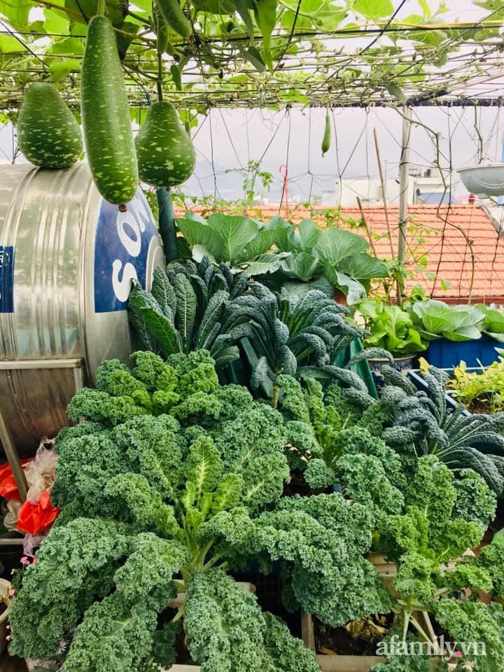 Cách trồng cải kale tốt tươi ngập tràn sân thượng của người phụ nữ đảm ở Quảng Ninh - Ảnh 7.
