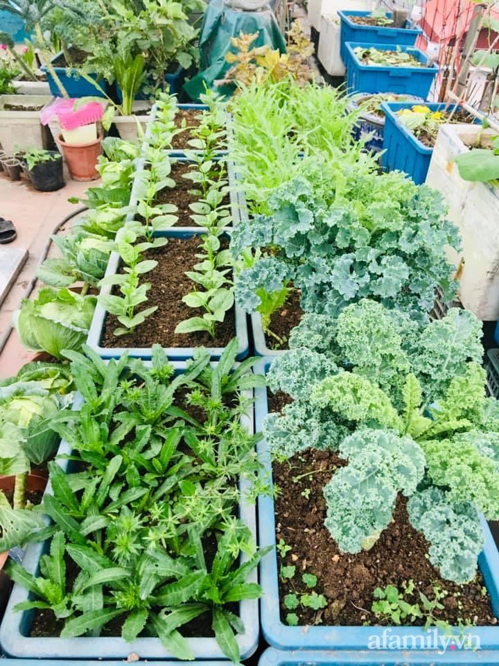 Cách trồng cải kale tốt tươi ngập tràn sân thượng của người phụ nữ đảm ở Quảng Ninh - Ảnh 14.