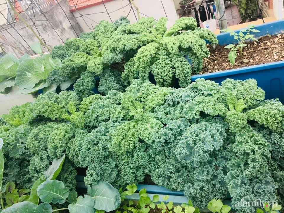 Cách trồng cải kale tốt tươi ngập tràn sân thượng của người phụ nữ đảm ở Quảng Ninh - Ảnh 4.