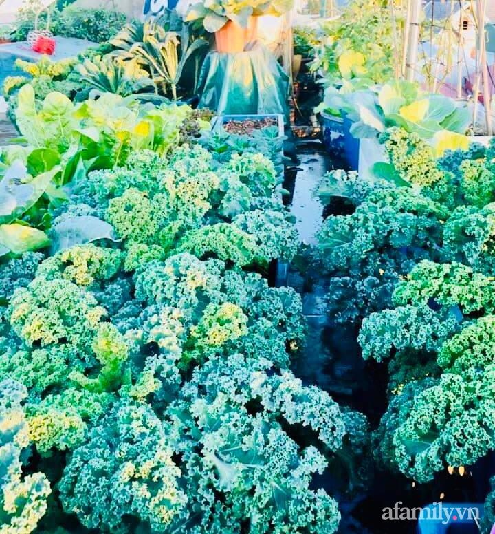 Cách trồng cải kale tốt tươi ngập tràn sân thượng của người phụ nữ đảm ở Quảng Ninh - Ảnh 21.