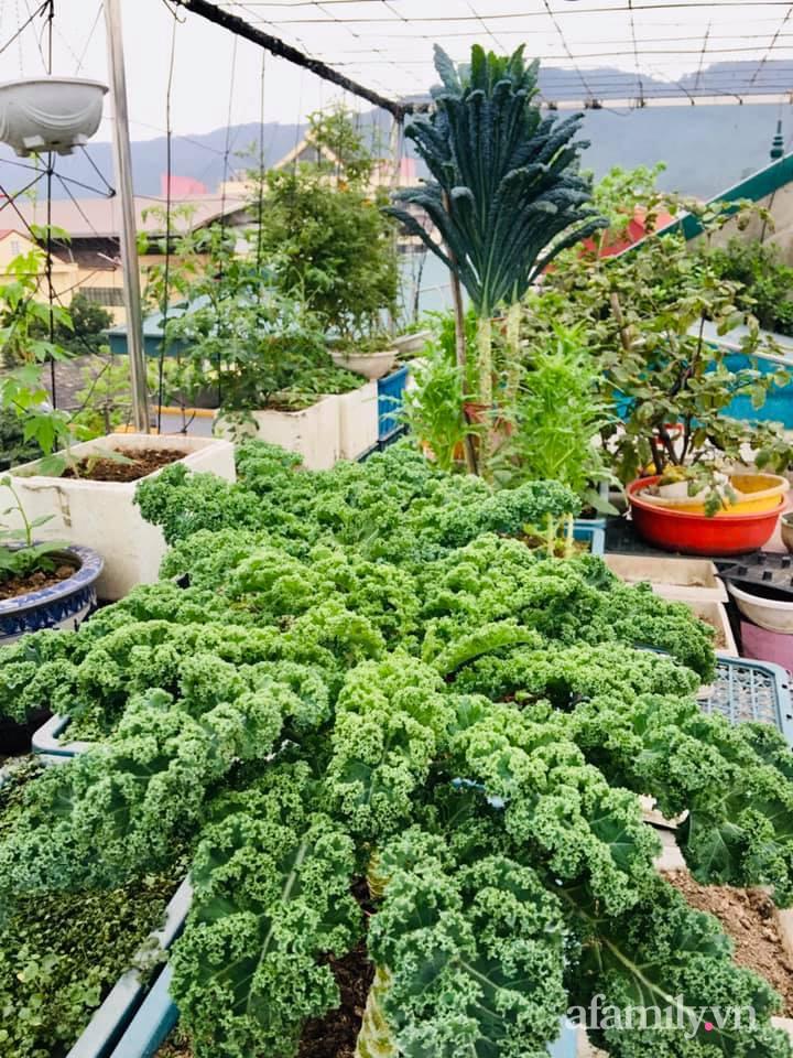 Cách trồng cải kale tốt tươi ngập tràn sân thượng của người phụ nữ đảm ở Quảng Ninh - Ảnh 16.
