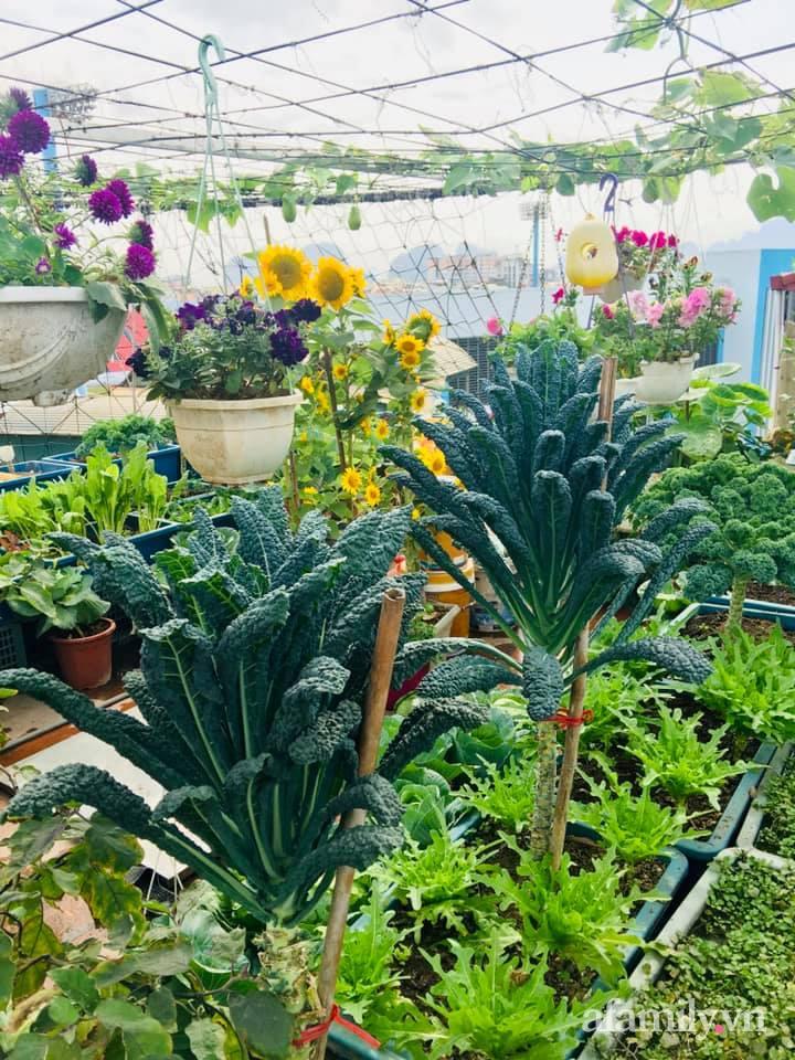 Cách trồng cải kale tốt tươi ngập tràn sân thượng của người phụ nữ đảm ở Quảng Ninh - Ảnh 15.