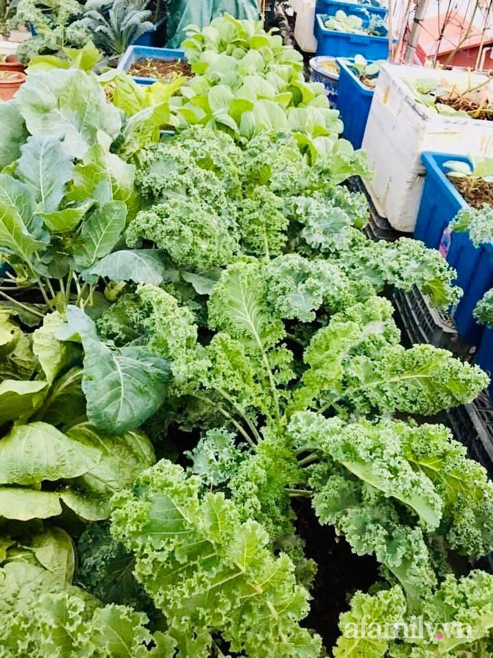 Cách trồng cải kale tốt tươi ngập tràn sân thượng của người phụ nữ đảm ở Quảng Ninh - Ảnh 20.