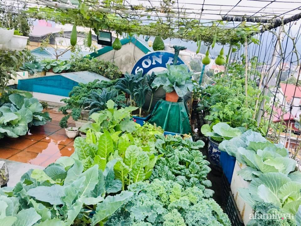 Cách trồng cải kale tốt tươi ngập tràn sân thượng của người phụ nữ đảm ở Quảng Ninh - Ảnh 3.