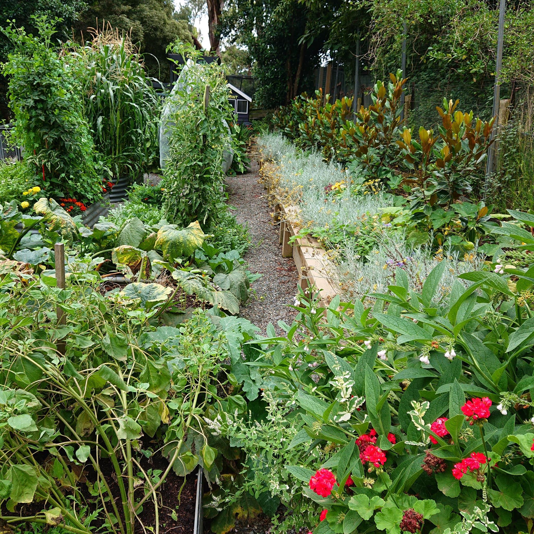 """Khu vườn 2800m2 quanh năm ngập tràn rau quả của người phụ nữ được mệnh danh là người """"nghiện cây"""" - Ảnh 7."""