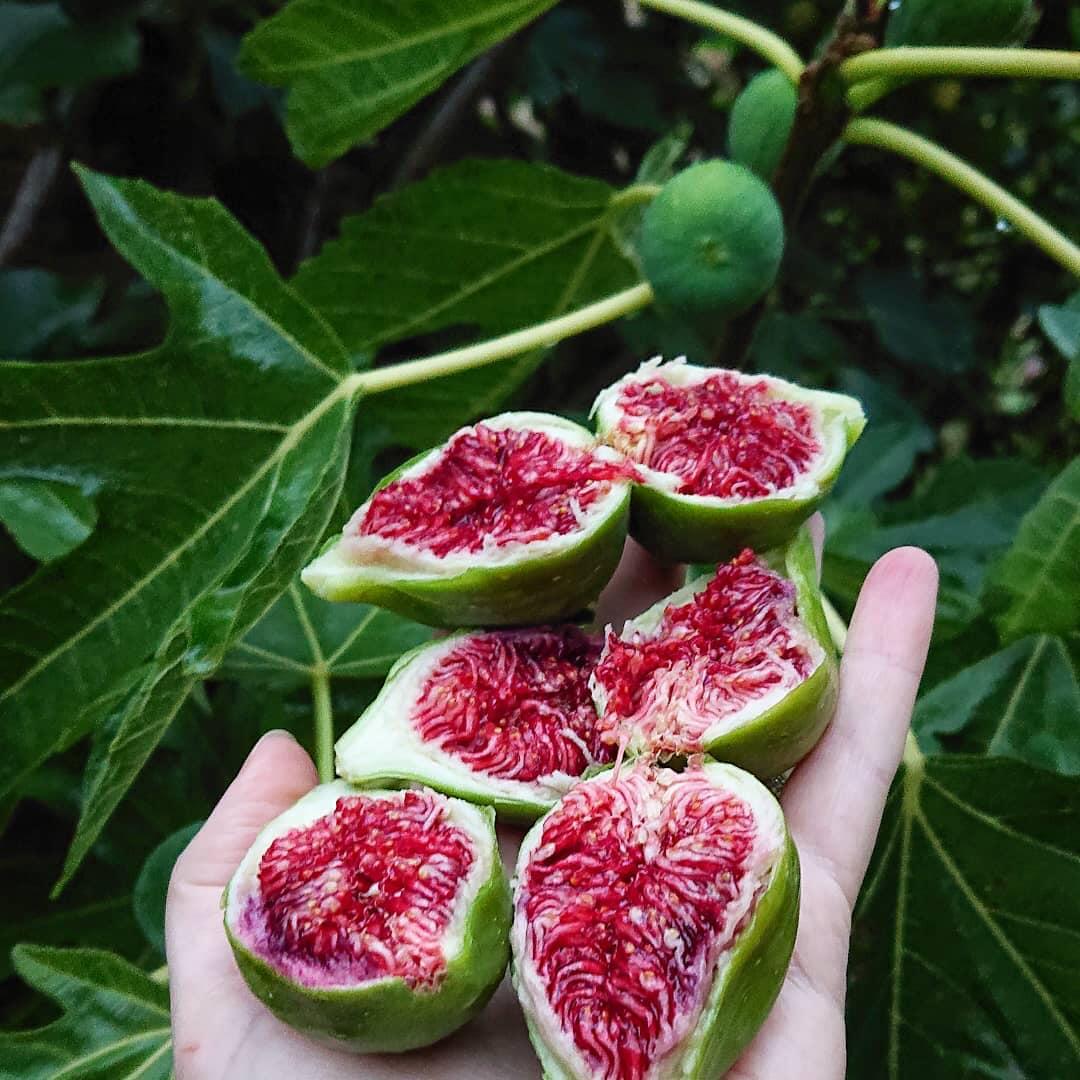 """Khu vườn 2800m2 quanh năm ngập tràn rau quả của người phụ nữ được mệnh danh là người """"nghiện cây"""" - Ảnh 12."""