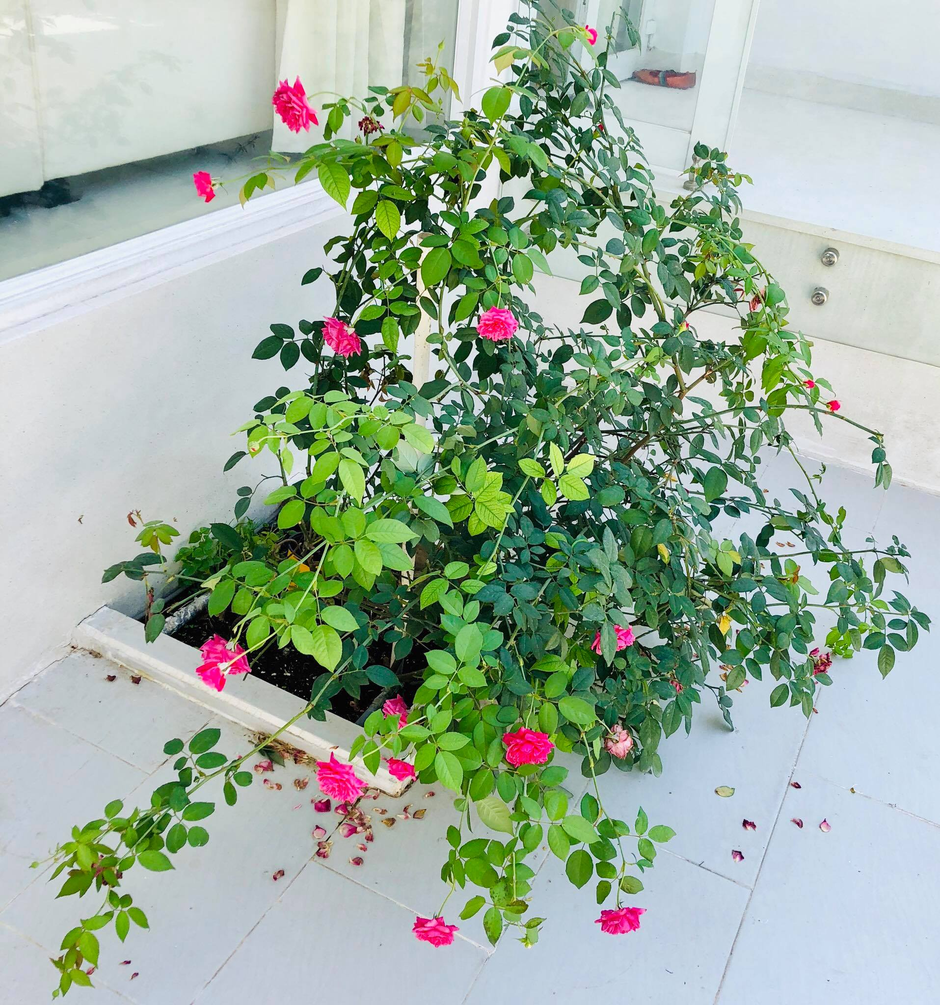 Ngắm vườn rau quả sạch tốt tươi, xanh mát trong biệt thự triệu đô của vợ chồng Thủy Tiên - Công Vinh - Ảnh 7.