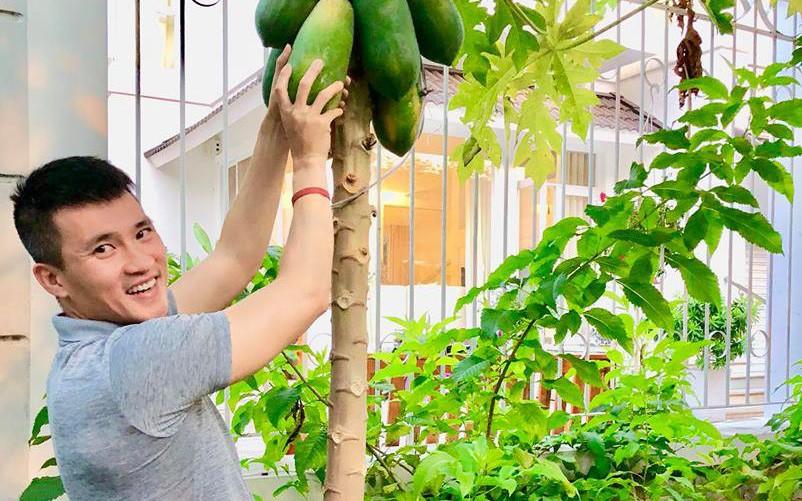 Ngắm vườn rau quả sạch tốt tươi, xanh mát trong biệt thự triệu đô của vợ chồng Thủy Tiên - Công Vinh - Ảnh 12.