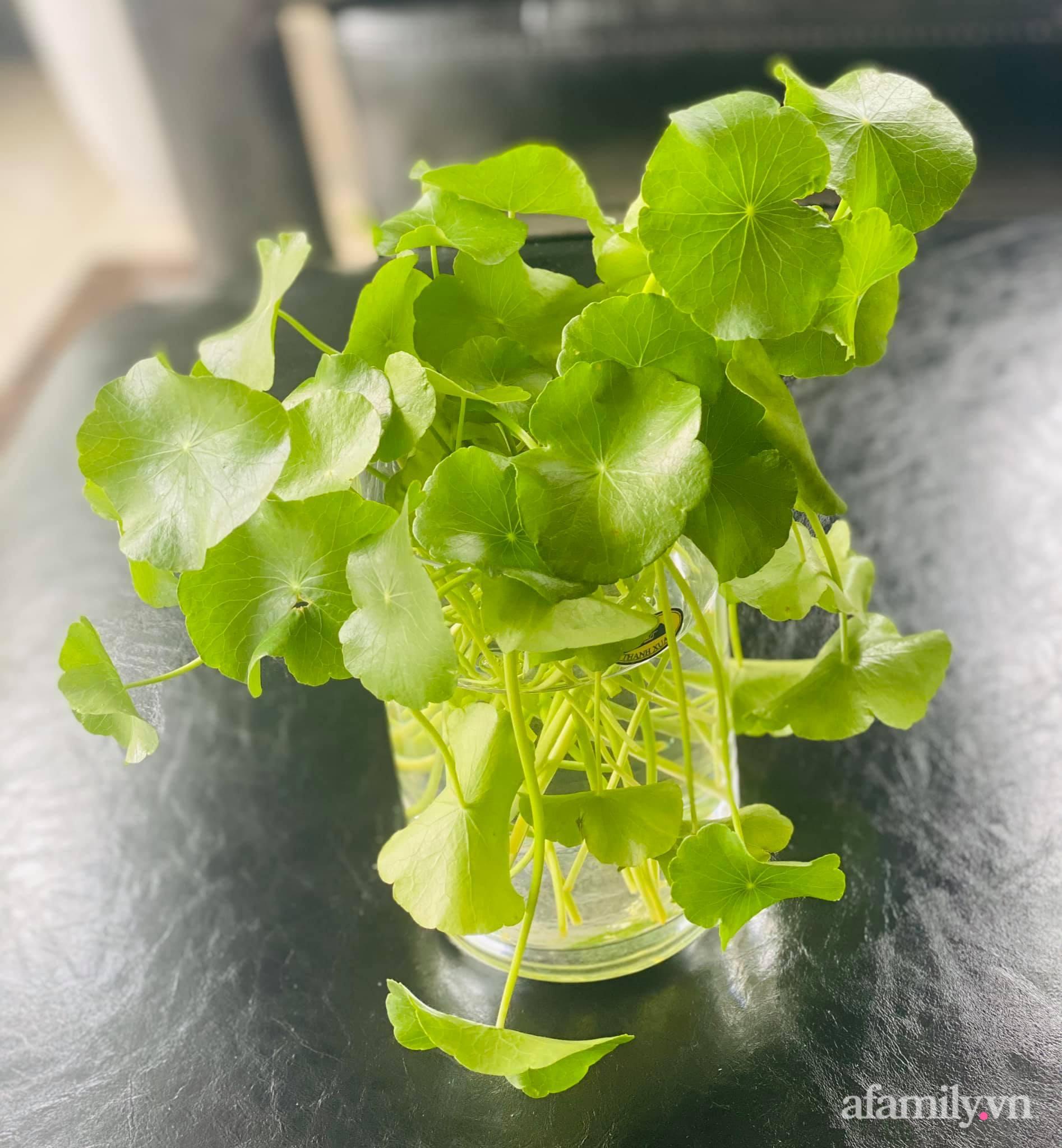 Bóc giá căn bếp đẹp chanh sả được đầu tư toàn đồ xịn sò với tổng chi phí gần 200 triệu đồng ở Hải Phòng - Ảnh 15.