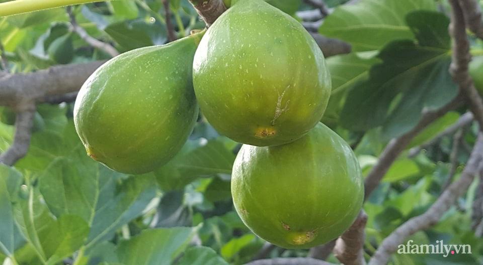 Khu vườn quanh năm tốt tươi rau trái rộng 1000m² của người phụ nữ Việt ở đảo Síp - Ảnh 7.