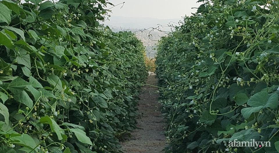 Khu vườn quanh năm tốt tươi rau trái rộng 1000m² của người phụ nữ Việt ở đảo Síp - Ảnh 1.