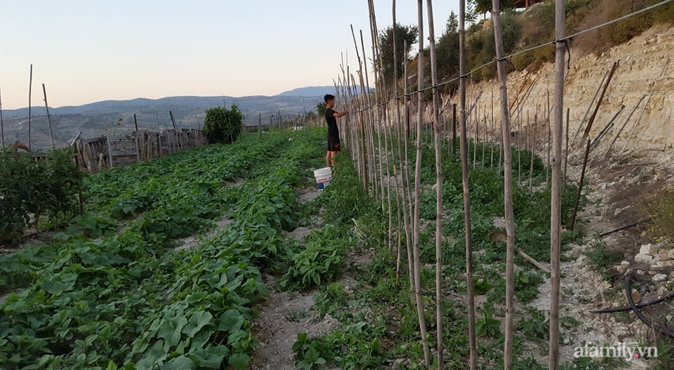 Khu vườn quanh năm tốt tươi rau trái rộng 1000m² của người phụ nữ Việt ở đảo Síp - Ảnh 2.