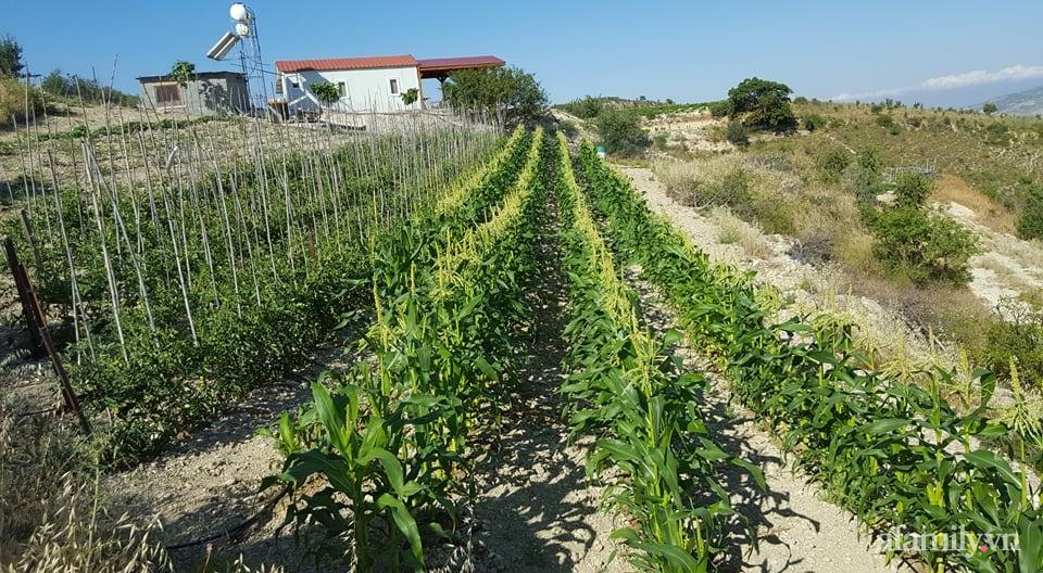 Khu vườn quanh năm tốt tươi rau trái rộng 1000m² của người phụ nữ Việt ở đảo Síp - Ảnh 12.