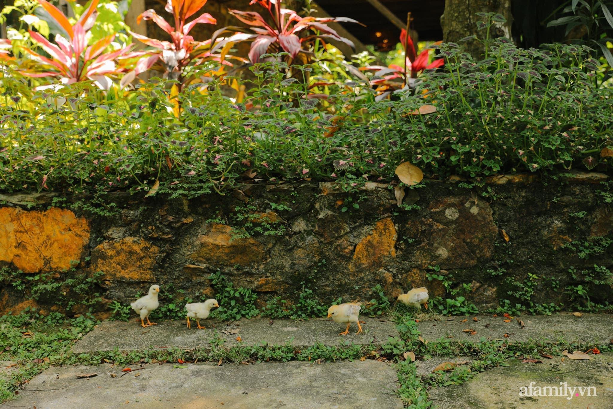 Cải tạo không gian rêu phong thành nhà vườn gói ghém những bình yên của người phụ nữ Hà Thành - Ảnh 5.