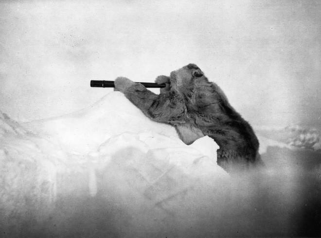 Công bố 9 bức ảnh làm nên lịch sử 130 năm của tạp chí lừng danh National Geographic - Ảnh 1.