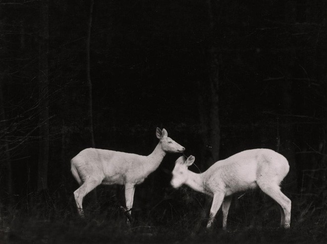 Công bố 9 bức ảnh làm nên lịch sử 130 năm của tạp chí lừng danh National Geographic - Ảnh 2.