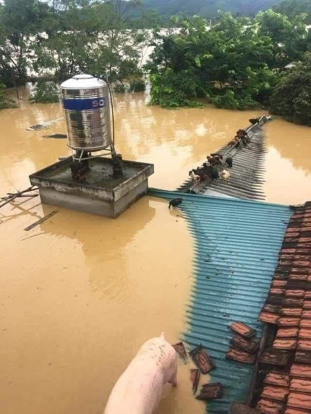 Nghệ An: Đã có 2 người mất tích sau mưa lũ - Ảnh 1.
