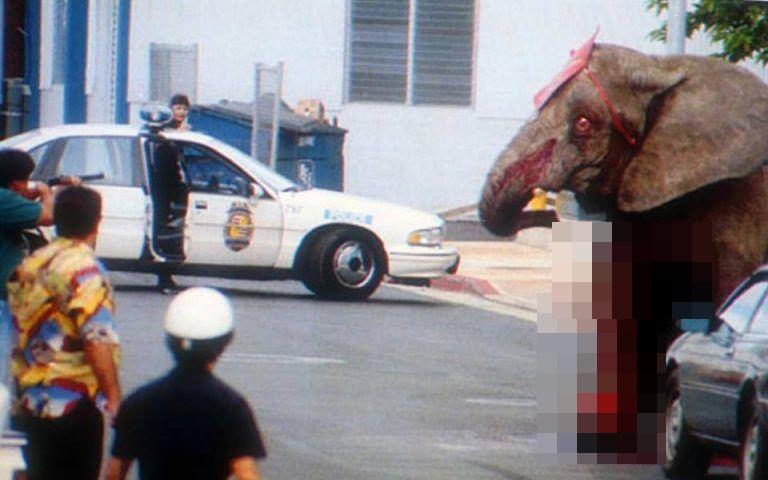Đôi mắt đỏ rực, tứa máu của một con voi thức tỉnh cả nhân loại: 20 năm chịu cảnh tù đày thống khổ và 87 phát đạn rung chuyển cả thế giới