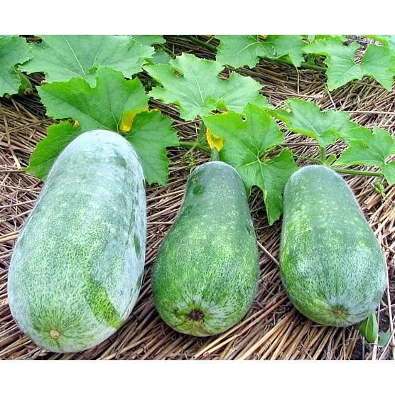 9 loại thực phẩm chẳng khác nào kháng sinh tự nhiên tăng cường hệ miễn dịch và giữ ấm cơ thể vào mùa đông - Ảnh 6.