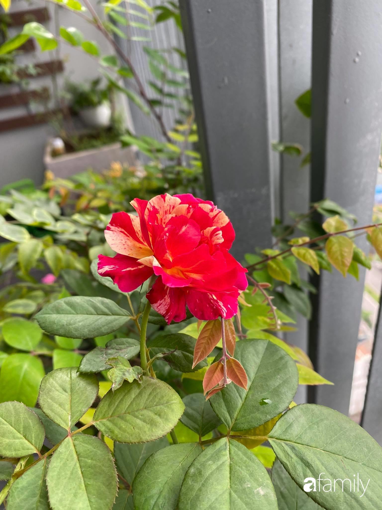 Ban công căn hộ thông tầng đẹp lãng mạn với cây và hoa ở Hà Nội - Ảnh 18.