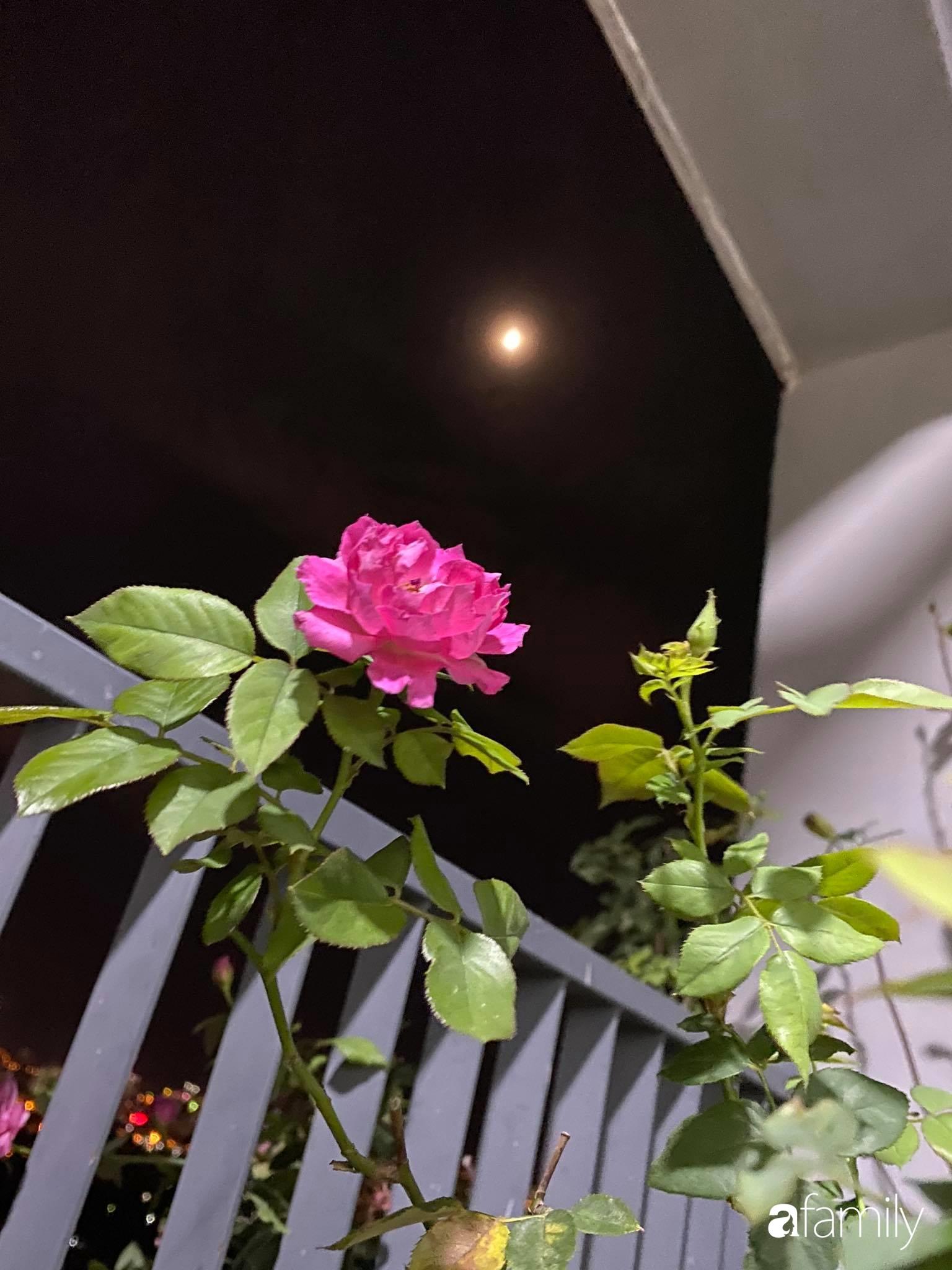 Ban công căn hộ thông tầng đẹp lãng mạn với cây và hoa ở Hà Nội - Ảnh 13.