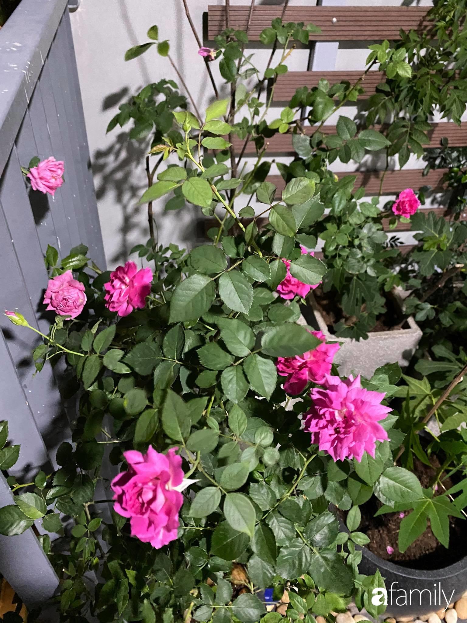 Ban công căn hộ thông tầng đẹp lãng mạn với cây và hoa ở Hà Nội - Ảnh 17.