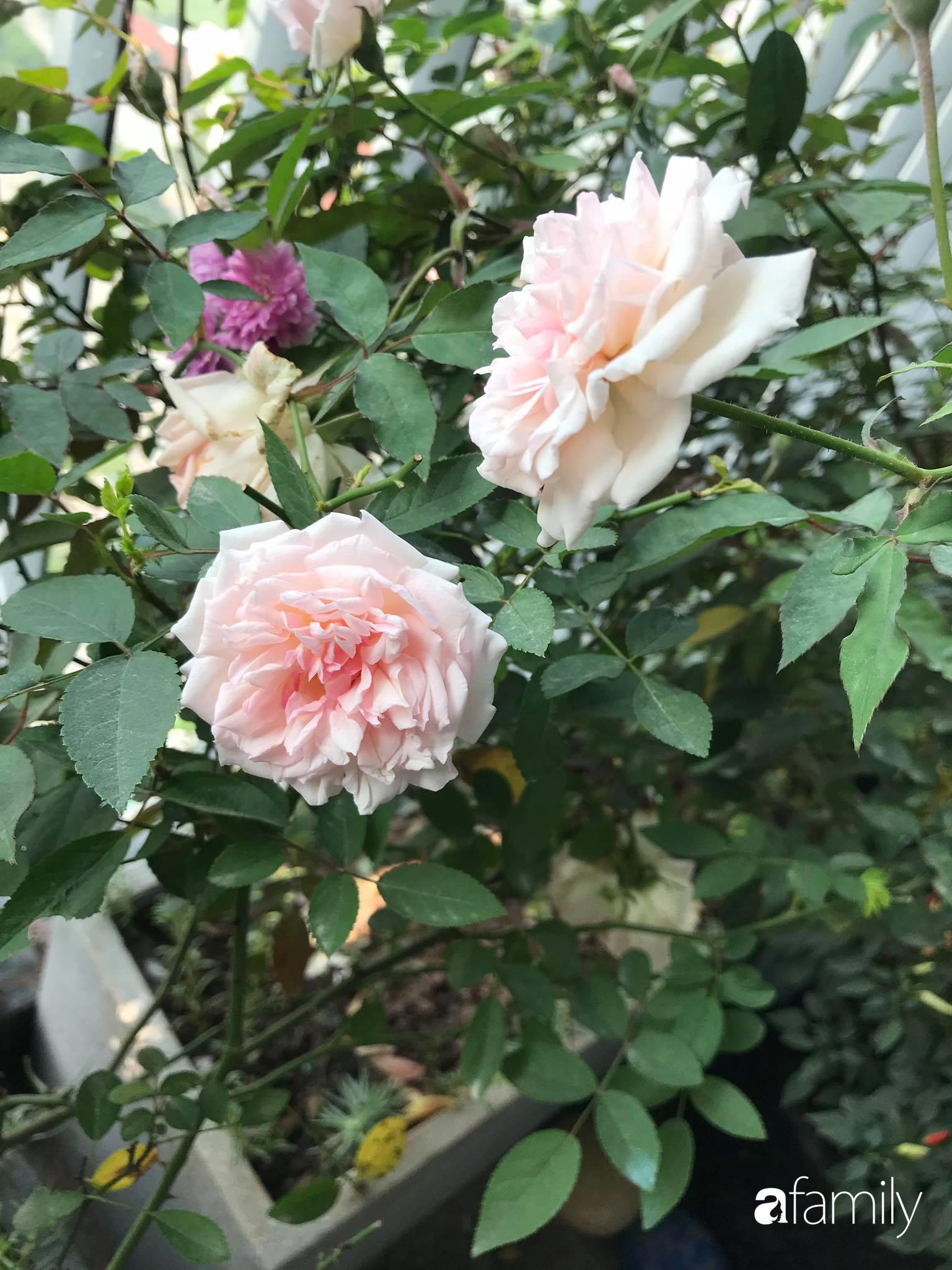 Ban công căn hộ thông tầng đẹp lãng mạn với cây và hoa ở Hà Nội - Ảnh 11.