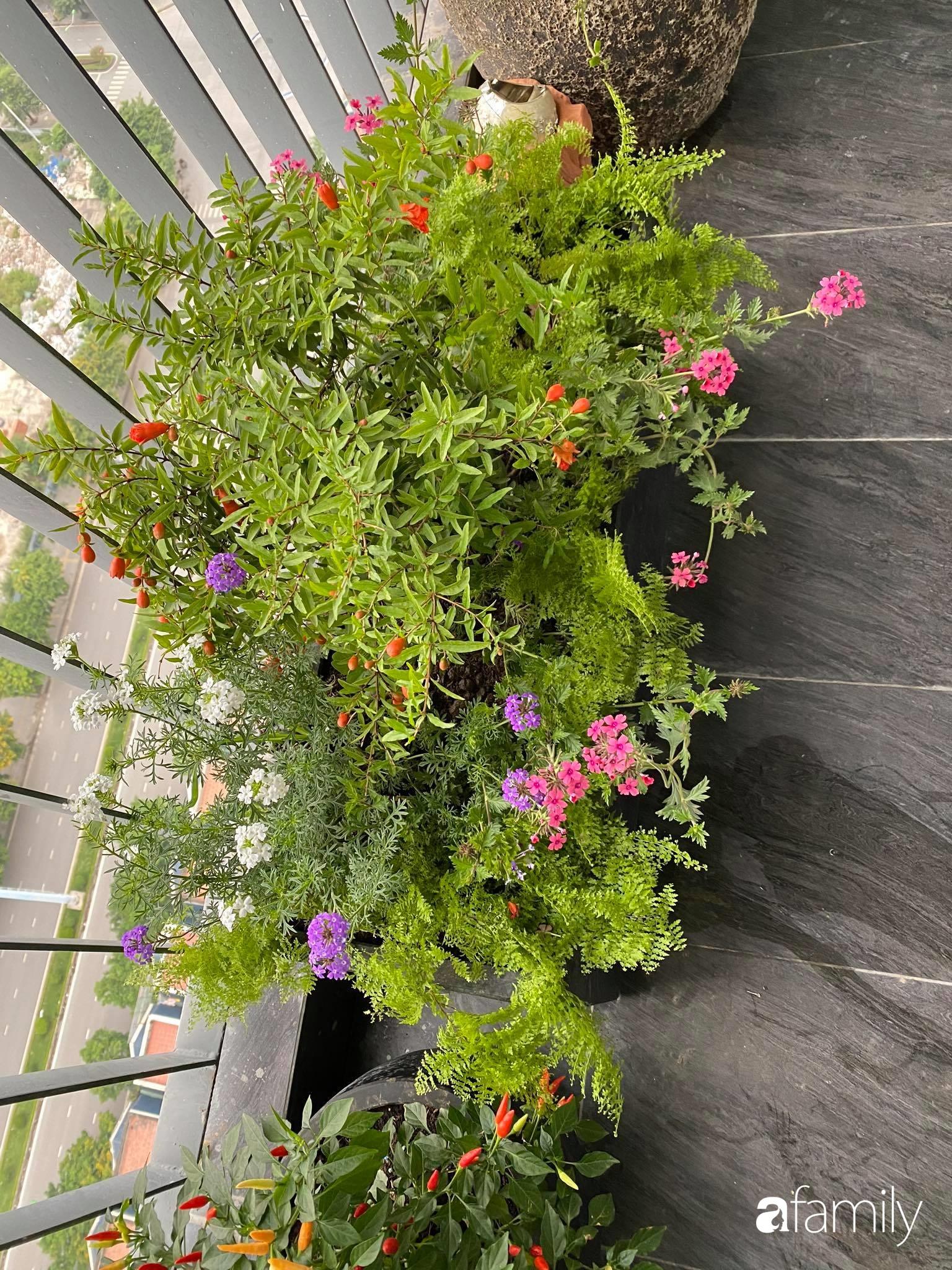 Ban công căn hộ thông tầng đẹp lãng mạn với cây và hoa ở Hà Nội - Ảnh 7.