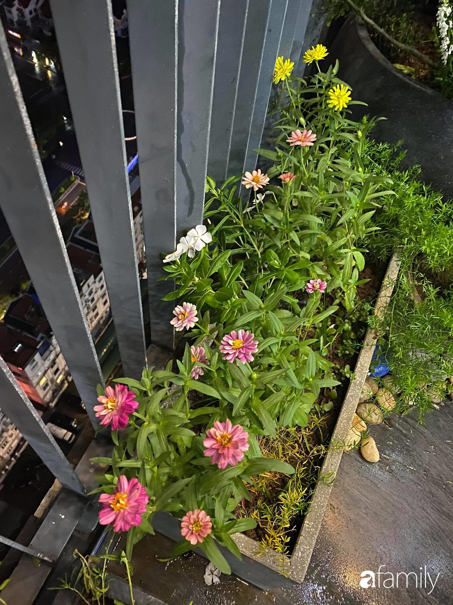 Ban công căn hộ thông tầng đẹp lãng mạn với cây và hoa ở Hà Nội - Ảnh 3.