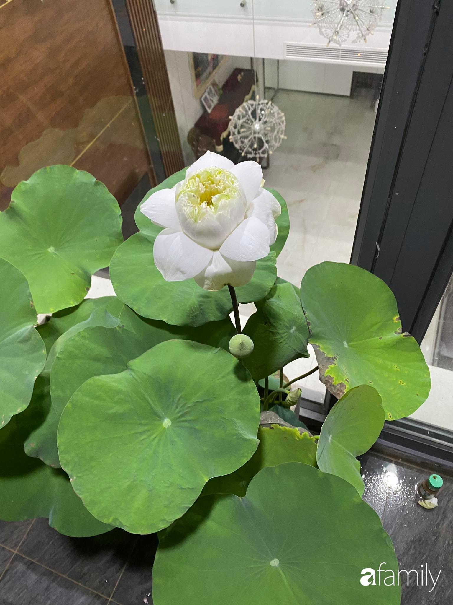 Ban công căn hộ thông tầng đẹp lãng mạn với cây và hoa ở Hà Nội - Ảnh 4.