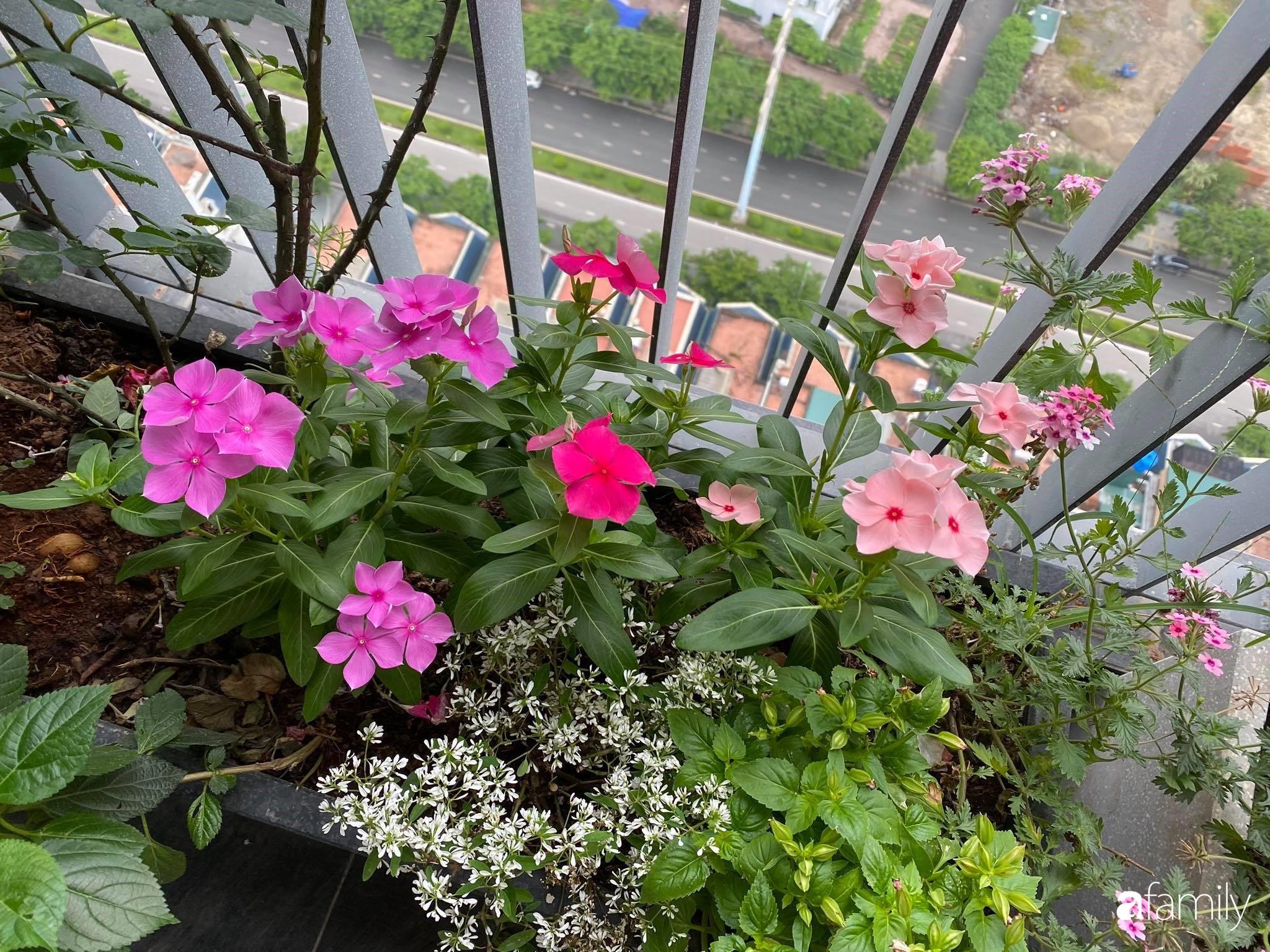 Ban công căn hộ thông tầng đẹp lãng mạn với cây và hoa ở Hà Nội - Ảnh 5.