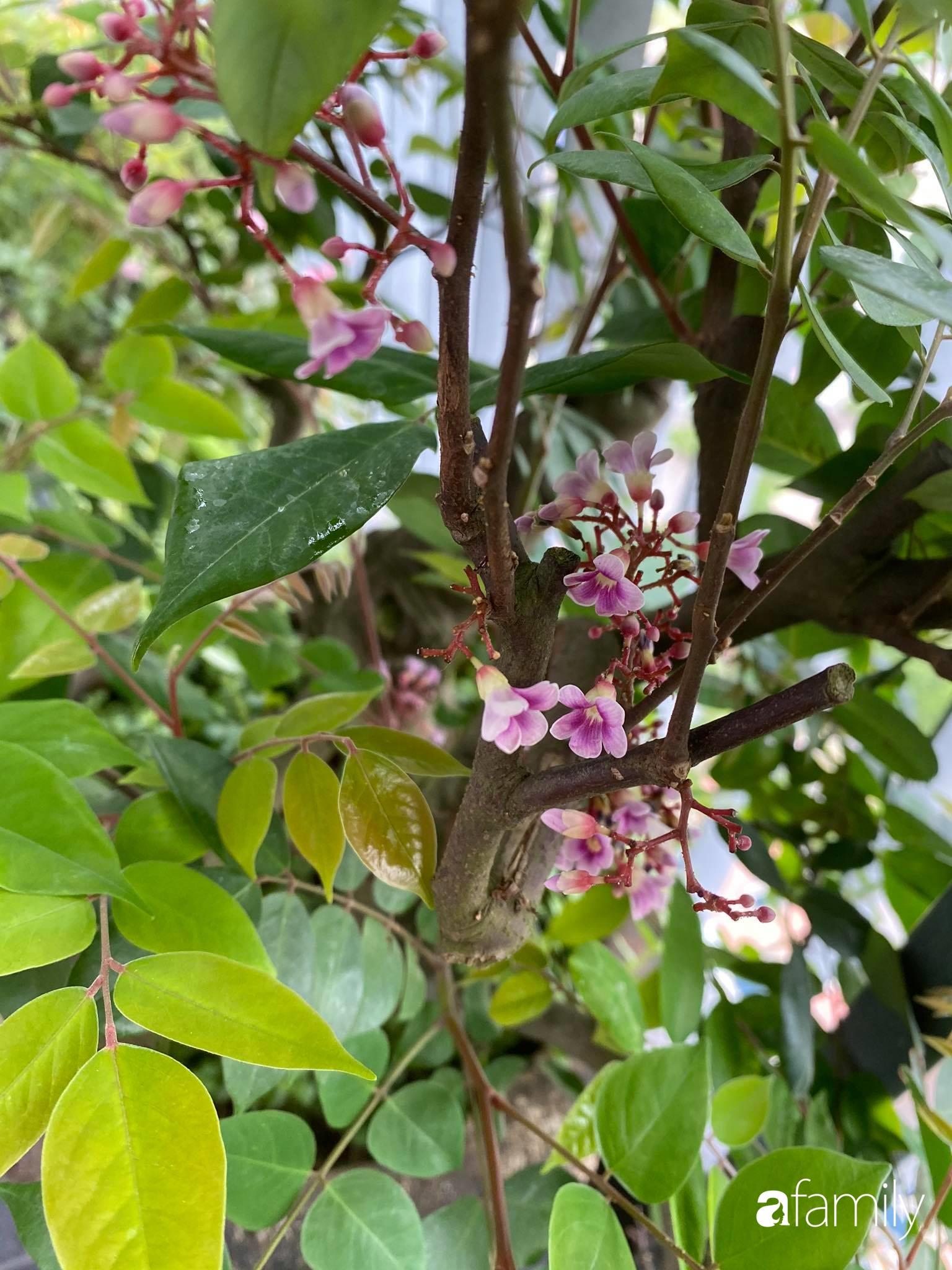Ban công căn hộ thông tầng đẹp lãng mạn với cây và hoa ở Hà Nội - Ảnh 14.